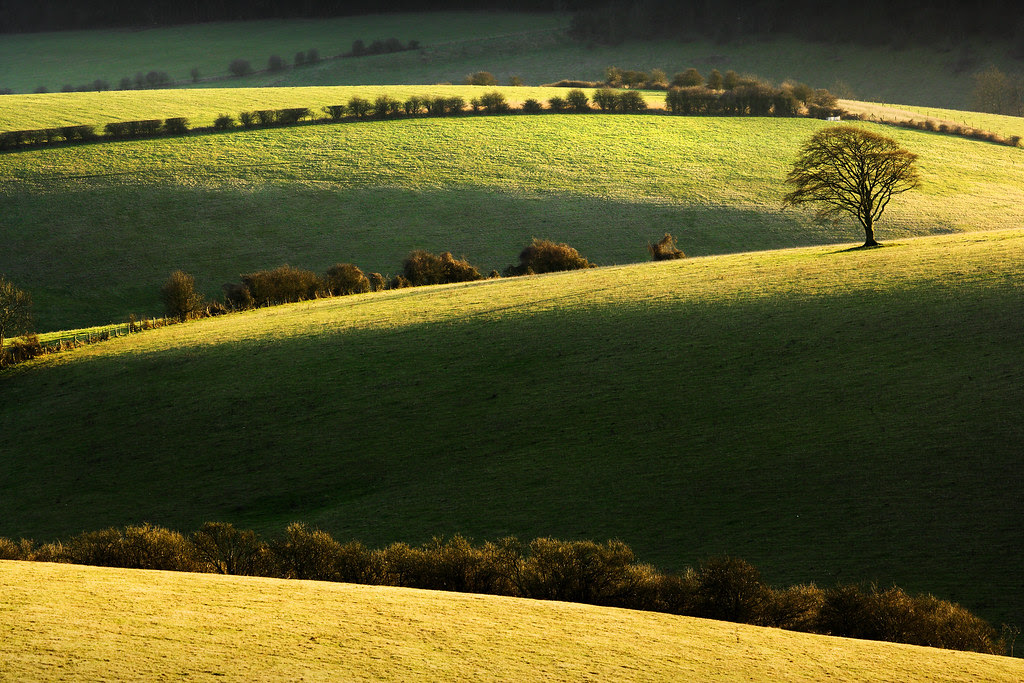 Golden Hour - Stanmer Down, South Downs