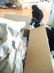 Josie exploring the box of food