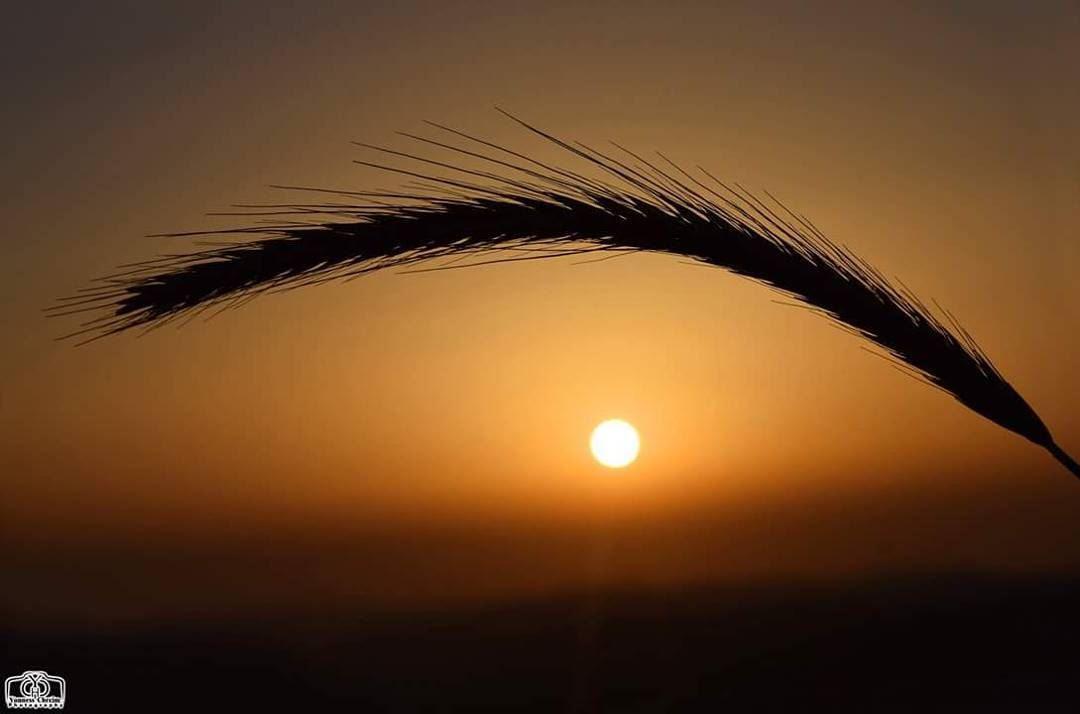 Good Evening My Friends Sunsetlebanon Sunset Lebanon Southlebanon