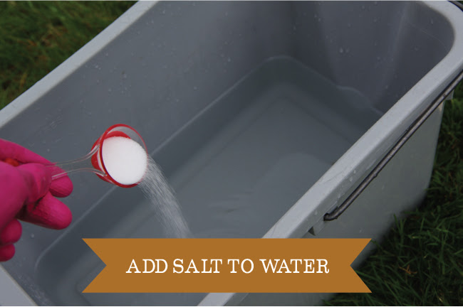 Dyeing - add salt to water