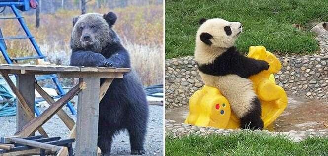 Ursos que não parecem ursos