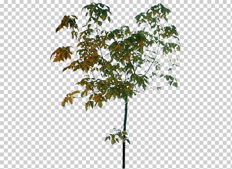 شعار ورقة شجرة بحواف