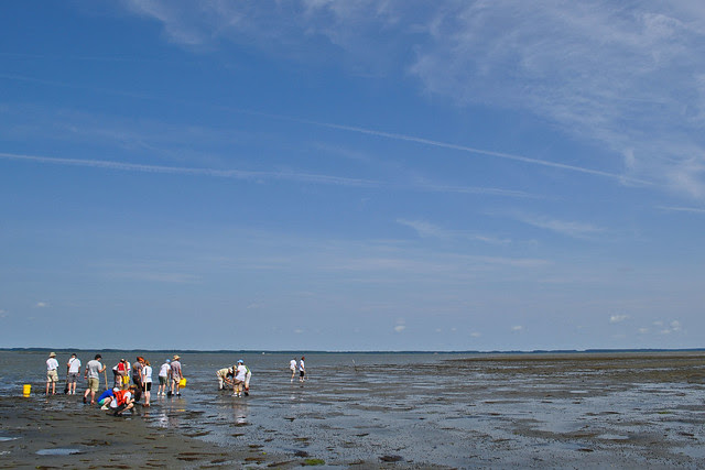Master Naturalists on the Flats (4)