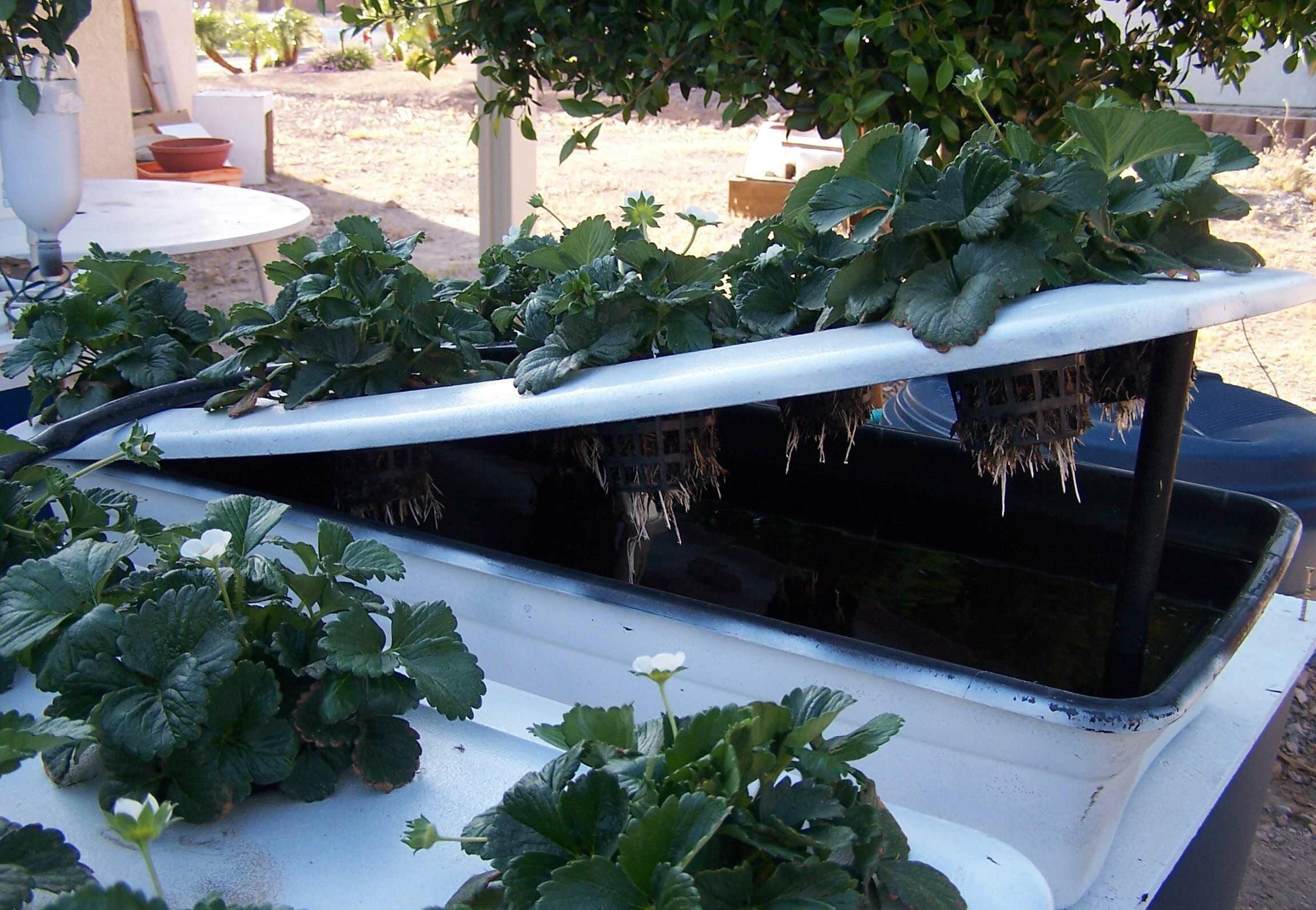 hydroponics systems designs