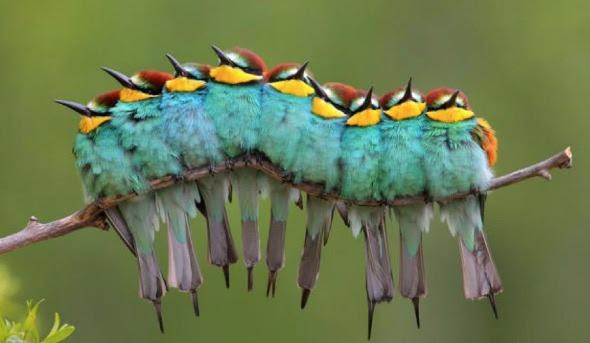 That Caterpillar Keeps Chirping