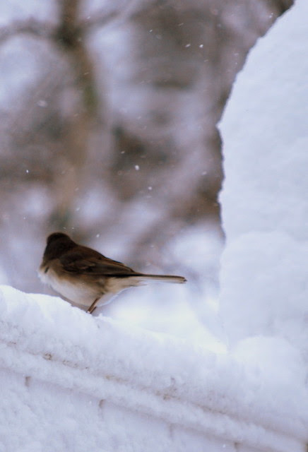 Winter birds 4