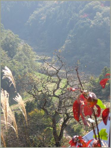 01 autumn walk START