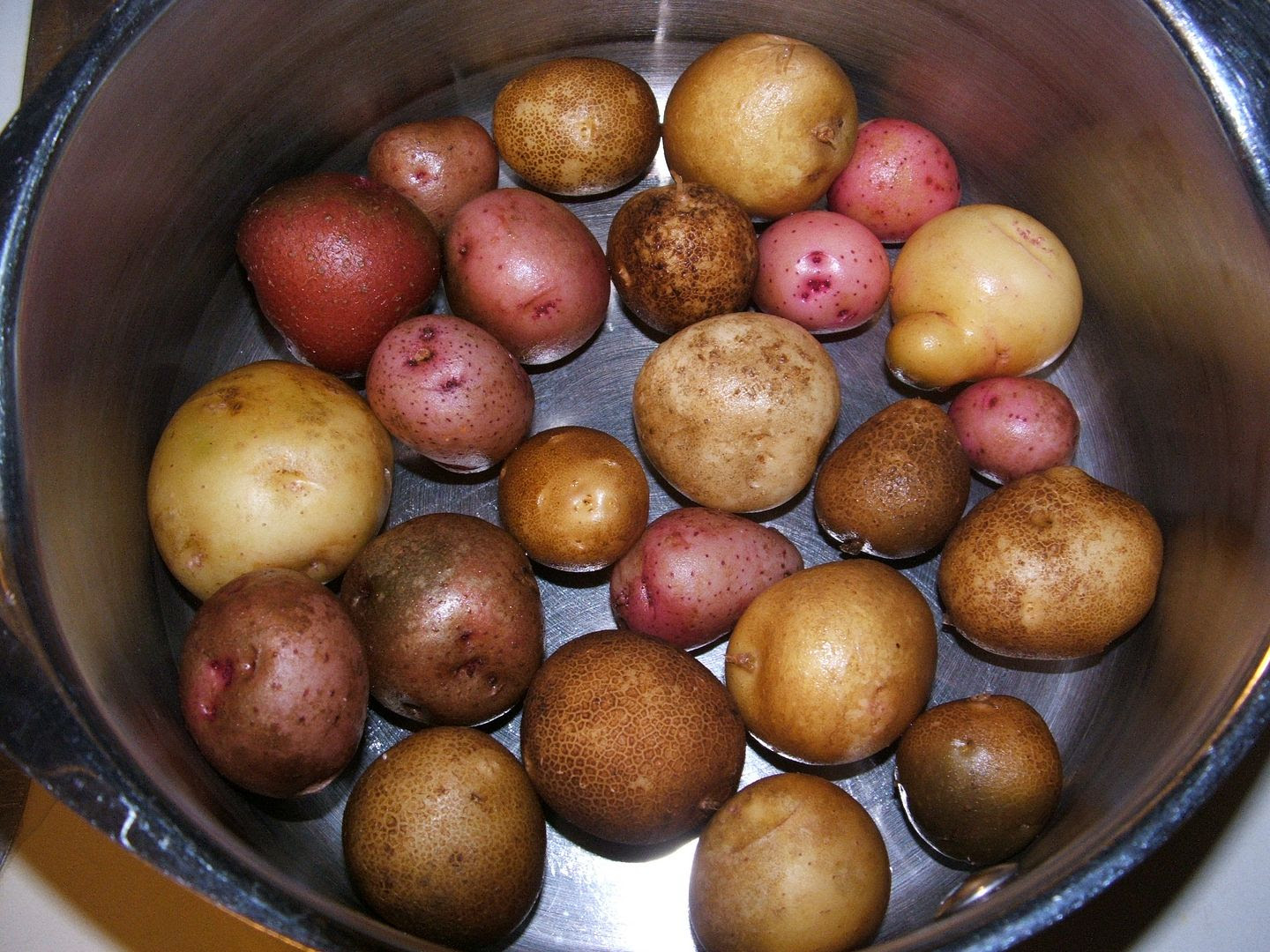 Tiny Tender Tater Treats by Angie Ouellette-Tower for godsgrowinggarden.com photo 001_zpsb231cdae.jpg