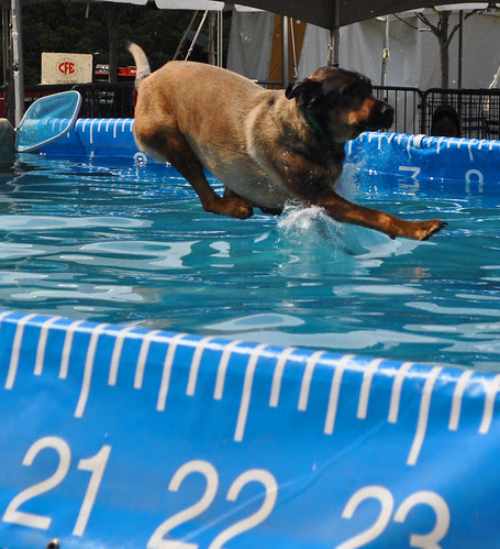 Dock Dogs (3)