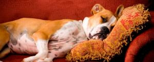 Pet Friendly Accommodation