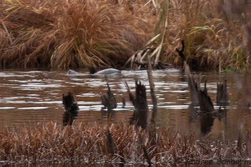 Otters in the Beaver Bog   -20.jpg