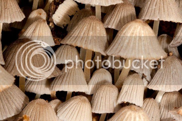 photo cogumelos_zpsa30ea6b7.jpg
