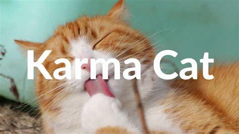 karma cat dyalla copyright  youtube