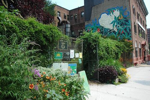 Brooklyn Bear's Carlton Avenue Garden