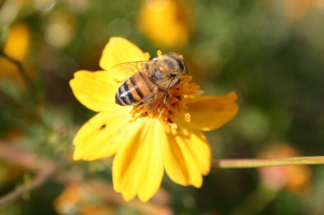 Arılar Hakkında Bilgi