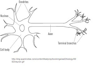 Jesseca's Anatomy Blog: Basic Nervous System Worksheet