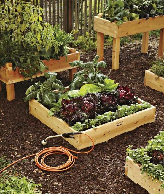 Designs For An Amazing Backyard Garden