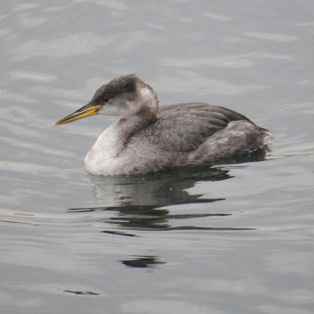 Ed Gaillard: birds &emdash;