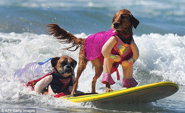 His and hers: Hanzo, left, and Kalani, right, surf together in cute matching capes