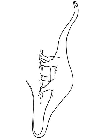 Dibujo De Dinosaurio Diplodocus Jurásico Para Colorear Dibujos