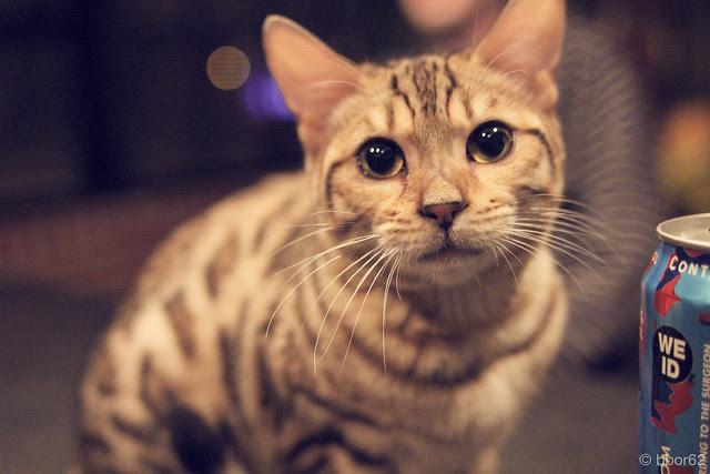 leopard kitty n 4loco
