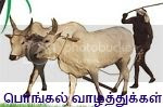 photo pongal-greetings-22ed2.jpg