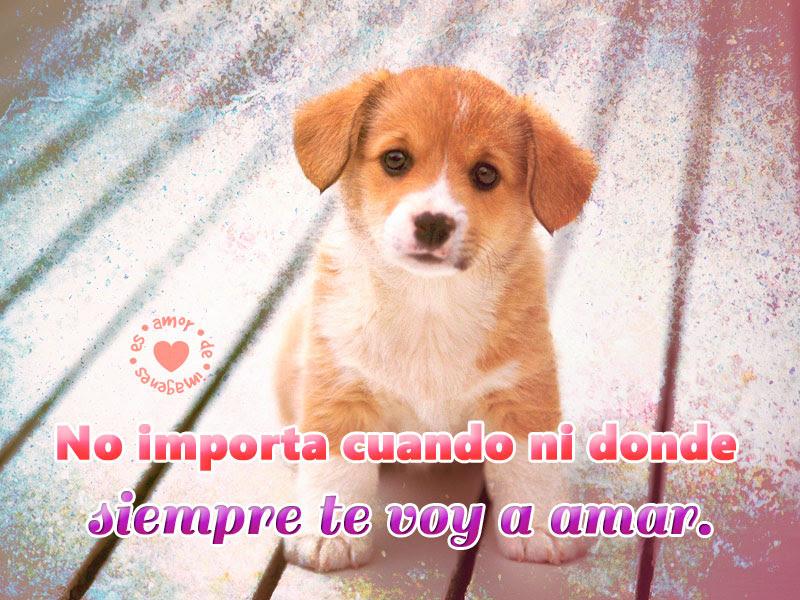Fotos De Perros Quiero Uno Fotos De Perros Bonitos Graciosos