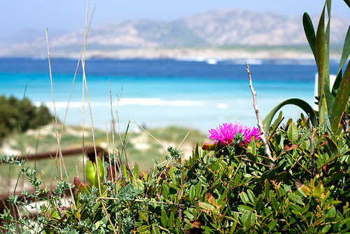 Stintino, spiaggia La Pelosa Aprile 2009