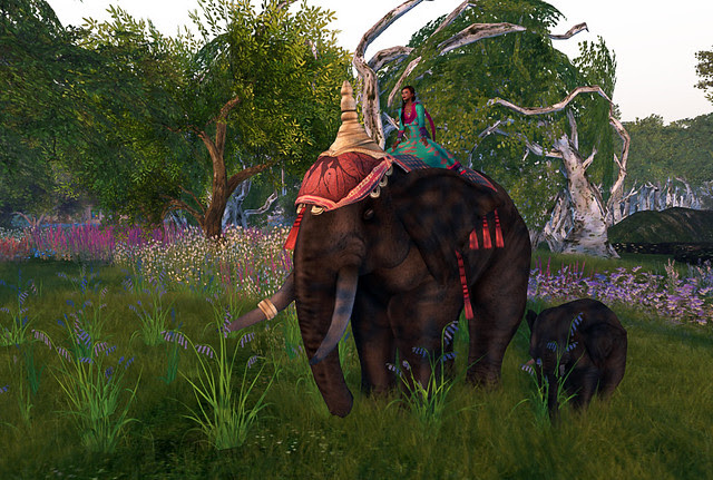 Riding the elefant 5