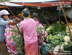 Myanmar, Pyin Oo Lwin, Roadside vendor buying flowers. Toa Payoh Vets