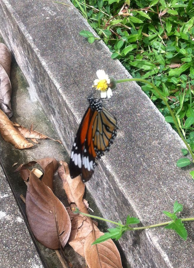 OCT 3: I spied a butterfly photo butterfly_zps4c609683.jpg