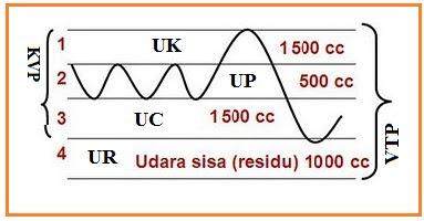 Faktor-faktor Yang Mempengaruhi Kecepatan Frekuensi Pernapasan