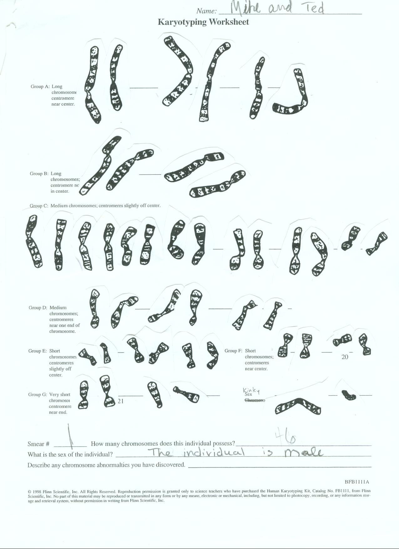 35 Karyotype Analysis Worksheet Answers - Worksheet ...