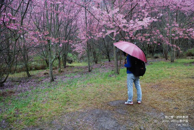 2012_0227_雨之櫻。武陵農場DSC_4313_14