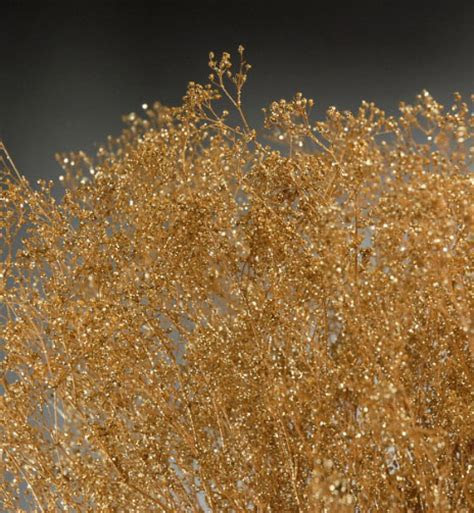 Gold Baby's Breath Branches 4oz Bunch 26in