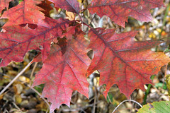 leaves 11