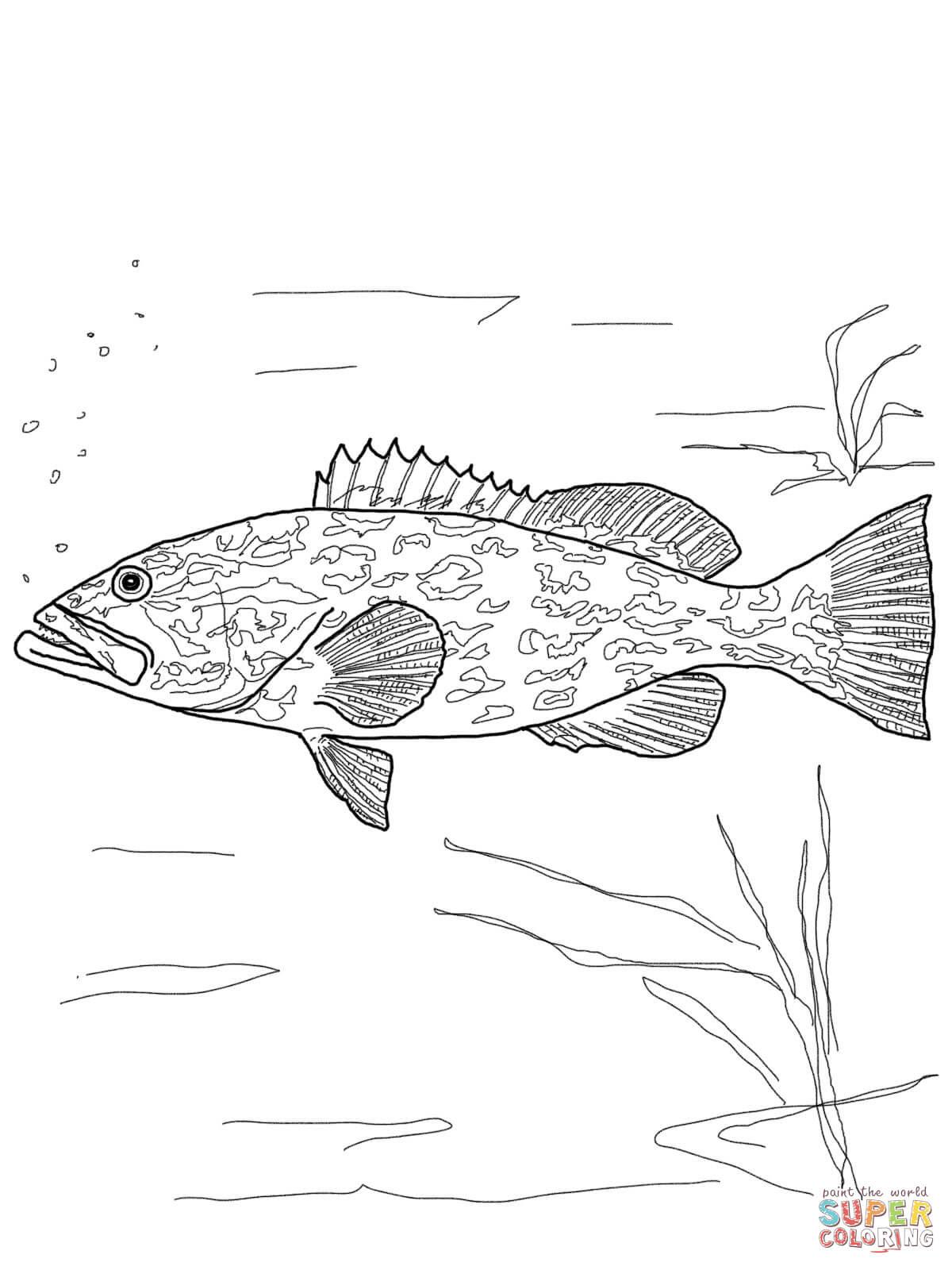 Yellowfin Tuna Drawing at GetDrawings | Free download