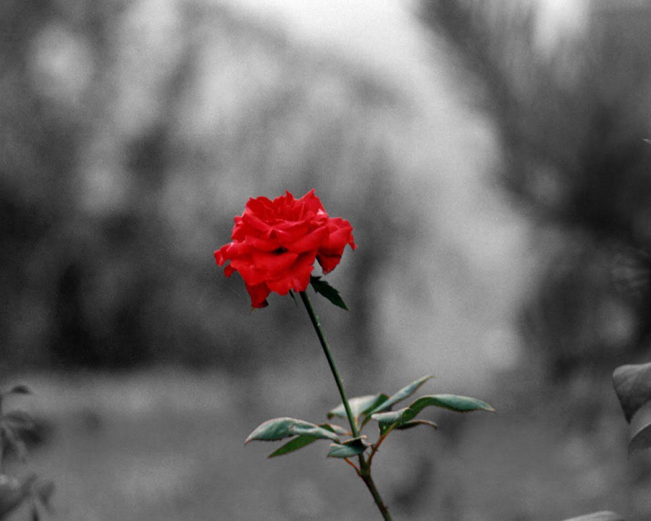 Soñar Con Rosas Que Significa