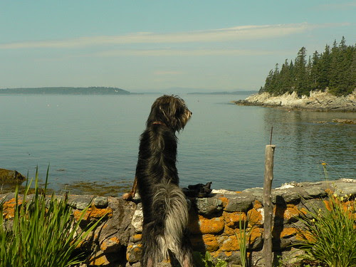 Pappy Watching The Sea