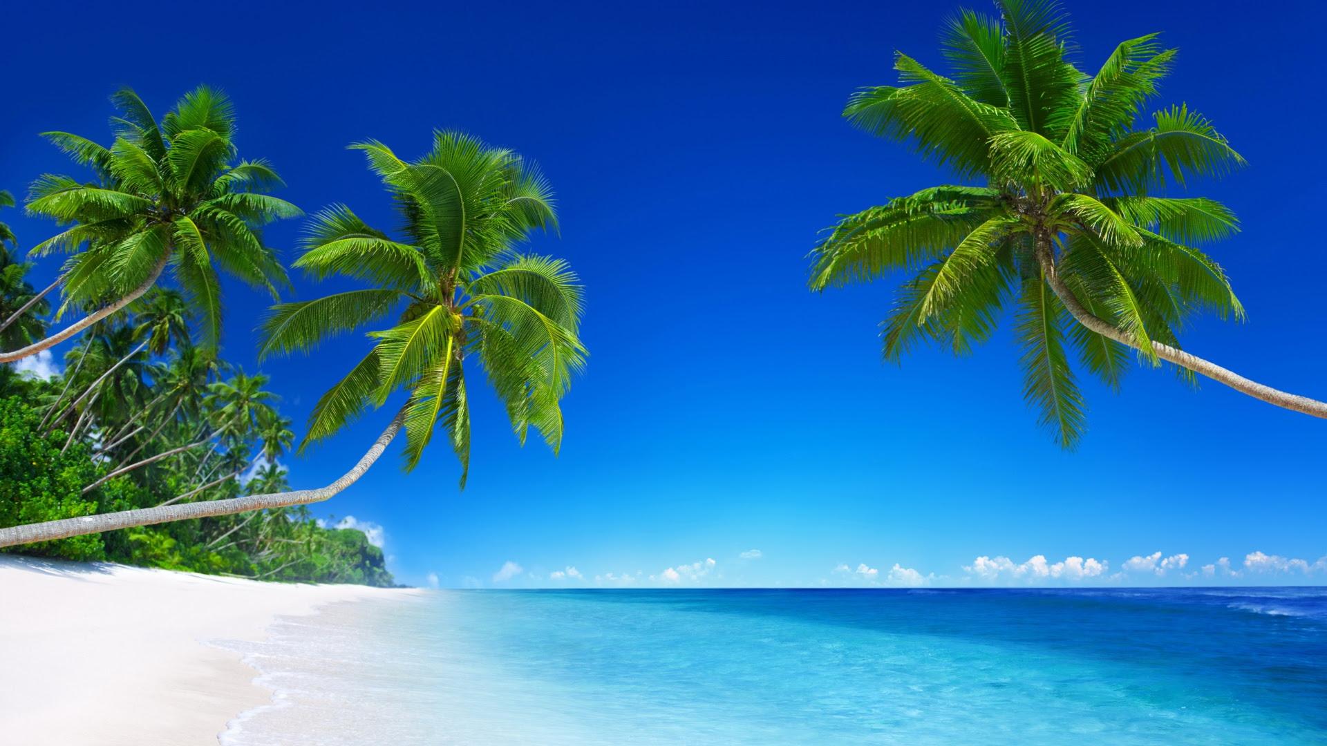 Tropical Beach Paradise [1920x1080]