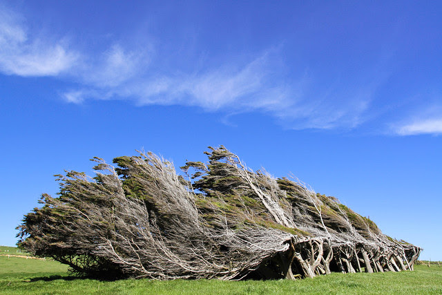 Windswept trees at Slope Point