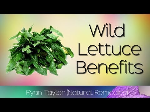 Wild Lettuce: Natural Painkiller Found in Your Backyard (Weed)