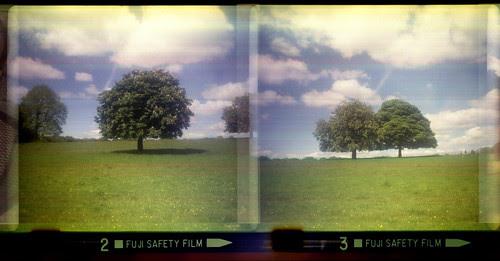 trees by pho-Tony