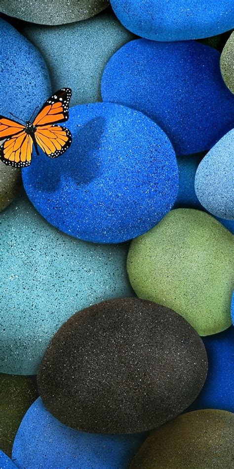 blue brown butterfly stones