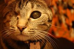 Maggie closeup