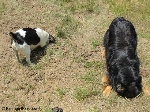 (16) Bert and Bear on the Mole Patrol - FarmgirlFare.com