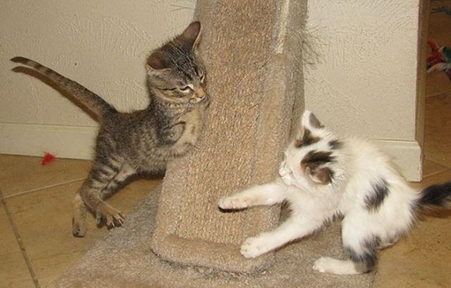 The Remarkable Two-Legged Kitten