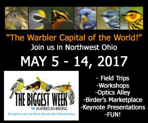 Biggest Week in Birding - Northwest Ohio