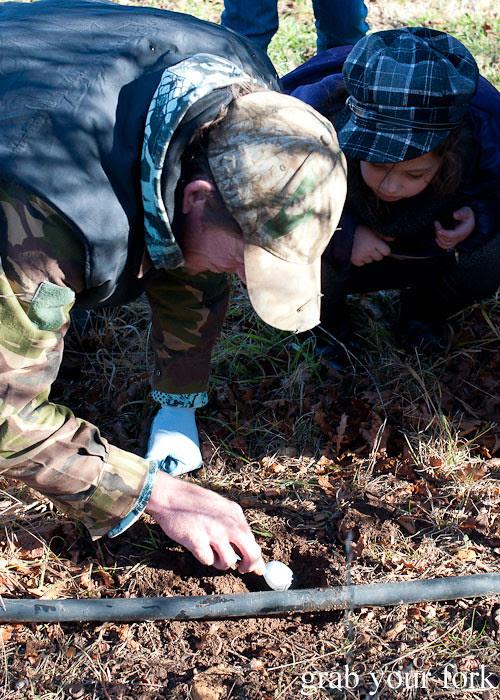 digging up a truffle on a truffle hunt
