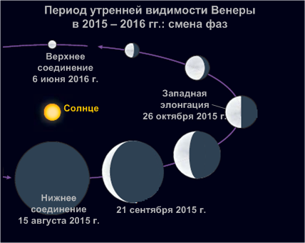 Смена фаз Венеры в течение периода утренней видимости в 2015/2016 гг.